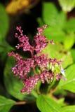 Crecimiento de flor salvaje Foto de archivo libre de regalías