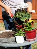 Crecimiento de flores Foto de archivo