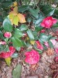 Crecimiento de flores bonito de la primavera foto de archivo