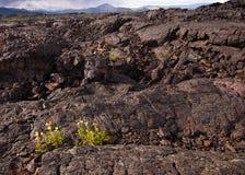 Crecimiento de flores en la lava en los cráteres de la luna Foto de archivo