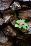 Crecimiento de flores en las rocas. Foto de archivo