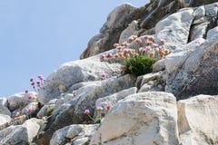 Crecimiento de flores en rocas Foto de archivo