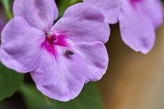 Crecimiento de flores púrpura en naturaleza imagenes de archivo