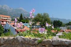 Crecimiento de flores rosado de la malva en la pared de piedra de la fortaleza Foto de archivo libre de regalías