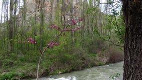 Crecimiento de flores rosado en el valle de Ihlara en Cappadocia fotos de archivo libres de regalías