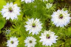 Crecimiento de flores salvajes colorido hermoso en el prado en día de verano soleado Foto de archivo