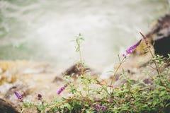 Crecimiento de flores salvajes púrpura por el lago Fotos de archivo libres de regalías