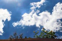 Crecimiento de flores sobre el top de la pared del adobe con el cielo azul dramático y nubes mullidas wispy y manchas solares imagen de archivo libre de regalías