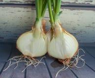 Crecimiento de la cebolla verde Raíces de la cebolla verde en un fondo de madera Raíces de la planta Fotos de archivo libres de regalías