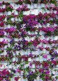 Crecimiento de la flor en pote Imagen de archivo