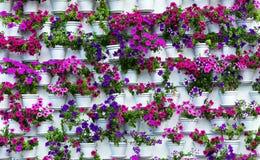 Crecimiento de la flor en pote Fotos de archivo