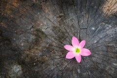 Crecimiento de la flor para arriba en árbol muerto Imagen de archivo