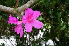 Crecimiento de la primavera Foto de archivo libre de regalías