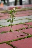 Crecimiento de las malas hierbas Imagen de archivo
