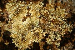 Crecimiento de molde natural de la textura Foto de archivo libre de regalías