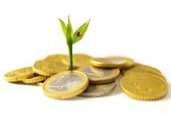 Crecimiento de nuevo dinero Fotos de archivo
