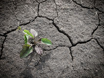 Crecimiento de poco árbol en suelo seco y de la grieta Imagen de archivo
