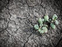Crecimiento de poco árbol en suelo seco y de la grieta Foto de archivo