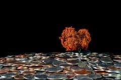 Crecimiento de su dinero fotografía de archivo