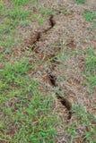 Crecimiento de tierra de la hierba de la grieta Fotos de archivo