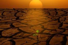 Crecimiento de tierra seco de la salida del sol nuevo Imágenes de archivo libres de regalías