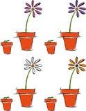 Crecimiento de una flor Imágenes de archivo libres de regalías