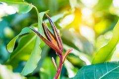 Crecimiento de verduras en selva tropical Imagen de archivo libre de regalías