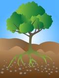 Crecimiento del árbol Stock de ilustración