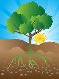 Crecimiento del árbol Ilustración del Vector