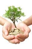 Crecimiento del árbol del dinero Imágenes de archivo libres de regalías