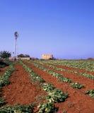 Crecimiento del ANG de la irrigación Foto de archivo libre de regalías