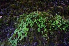 Crecimiento del bosque Imagen de archivo libre de regalías