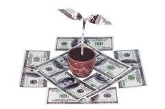 Crecimiento del dinero imagen de archivo libre de regalías