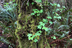 Crecimiento en árbol Foto de archivo libre de regalías