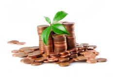 Crecimiento en ahorros imagen de archivo libre de regalías
