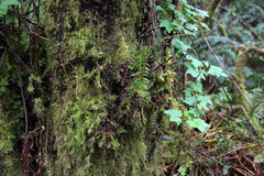 Crecimiento en el árbol 2 Foto de archivo libre de regalías
