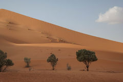 Crecimiento en las dunas Foto de archivo libre de regalías