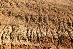 Crecimiento en suelo seco Foto de archivo libre de regalías