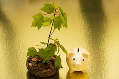 Crecimiento en sus ahorros Fotos de archivo libres de regalías
