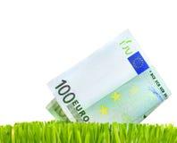 Crecimiento euro Imagen de archivo