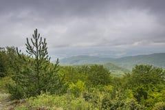 Crecimiento excesivo verde de la montaña 1 de Kopaonik Imagen de archivo libre de regalías