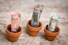 Crecimiento indio del concepto del dinero imagen de archivo