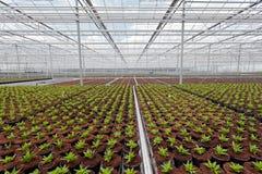 Crecimiento industrial de las plantas de jardín Fotos de archivo