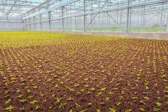 Crecimiento industrial de las plantas de jardín Imagen de archivo