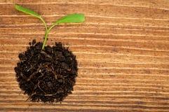 Crecimiento o nuevo concepto de la vida con la pequeña planta Fotos de archivo libres de regalías