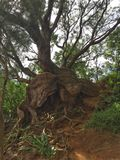 Crecimiento salvaje del árbol Fotos de archivo
