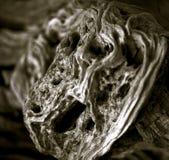 Crecimiento surrealista en el tronco del viejas aceitunas foto de archivo