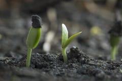Crecimiento vegetal del árbol de la semilla imagen de archivo libre de regalías