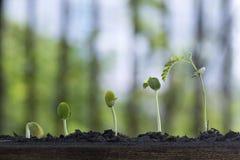 Crecimiento vegetal del árbol de la semilla imagenes de archivo