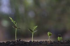 Crecimiento vegetal del árbol de la semilla en fondo de la naturaleza imágenes de archivo libres de regalías